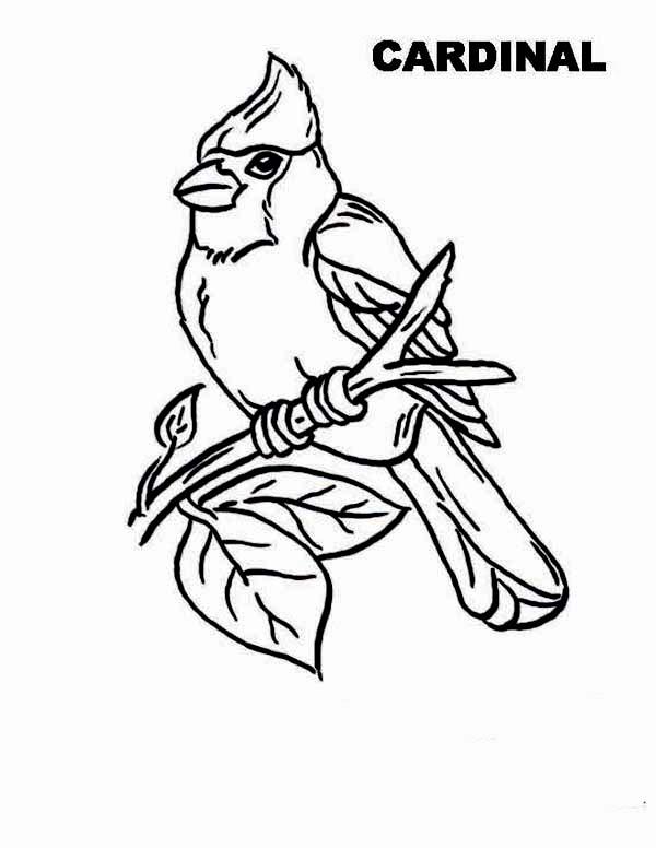 Cardinal Bird, : Cardinal Bird Picture Coloring Page