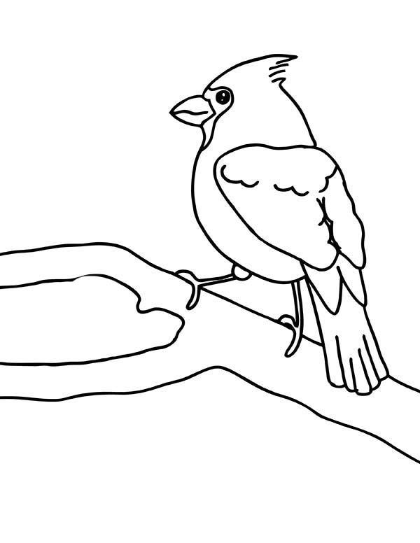 Cardinal Bird, : Cardinal Bird Singing Coloring Page