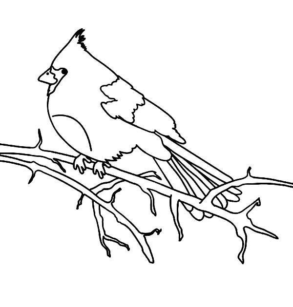 Cardinal Bird, : Cardinal Bird Stand on Dead Tree Branch Coloring Page