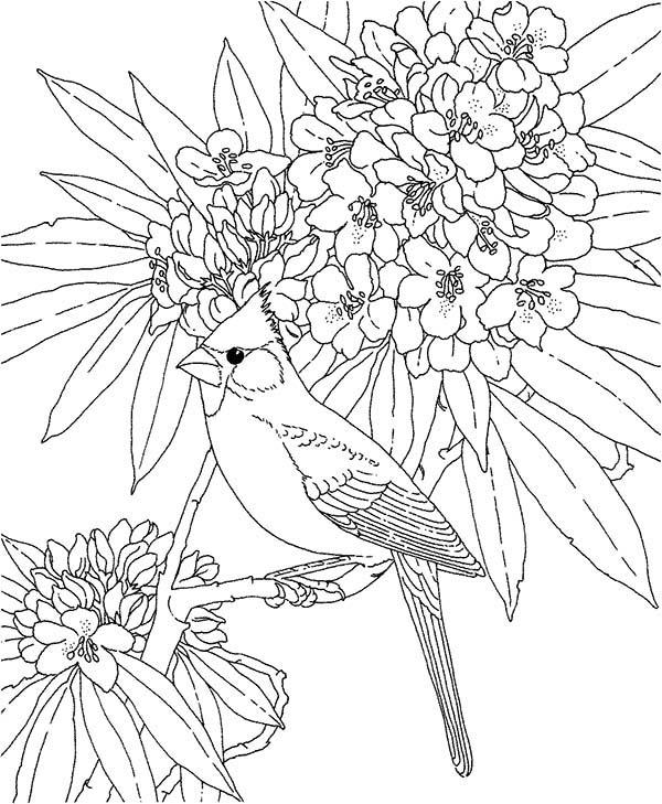 Cardinal Bird, : Cardinal Bird and Blooming Flower Coloring Page