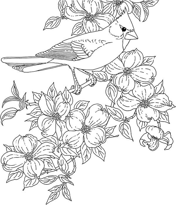 Cardinal Bird, : Cardinal Bird and Blossom Flower Coloring Page