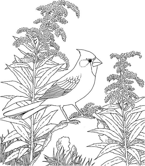 Cardinal Bird, : Cardinal Bird in the Wood Coloring Page
