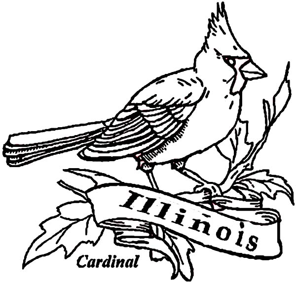 Cardinal Bird Of Illinois Coloring Page Coloring Sun