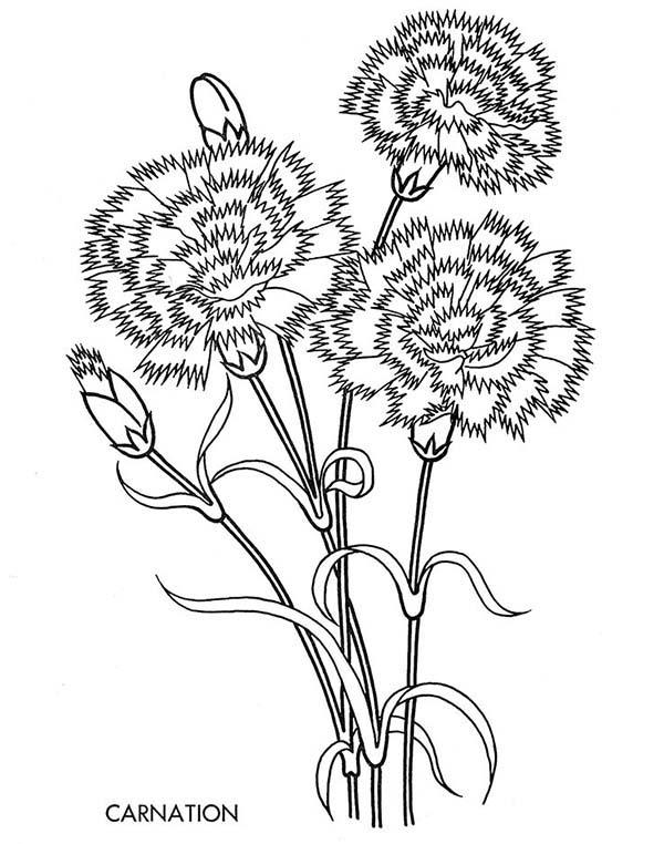 Carnation Flower, : Carnation Flower Moondust Coloring Page