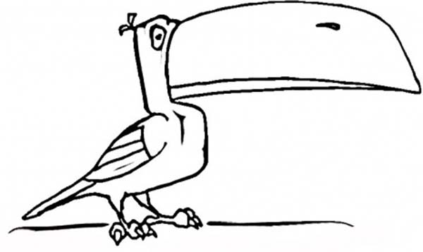 Toucan, : Cartoon of a Toucan Coloring Page