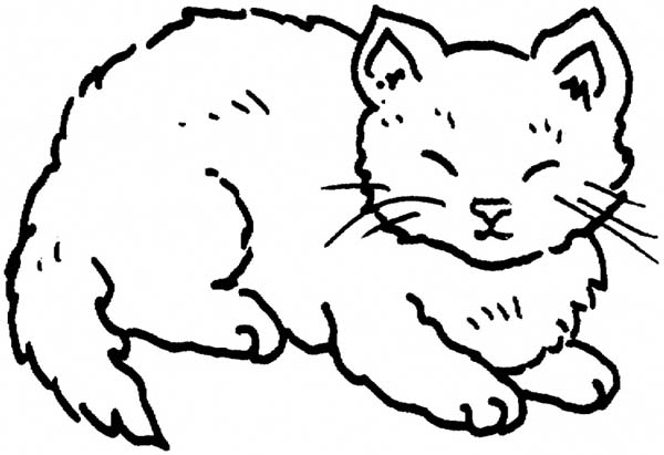 Cat, : Cat Closed His Eyes Coloring Page