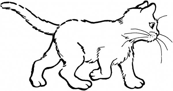 Cat, : Cat Wander Around Coloring Page