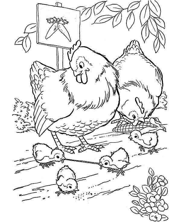 Chicken, : Chicken Looking for Food Coloring Page