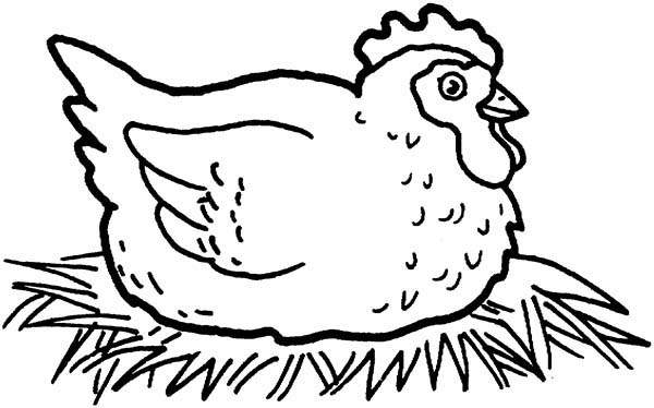 Chicken, : Chicken Mother Incubating Coloring Page