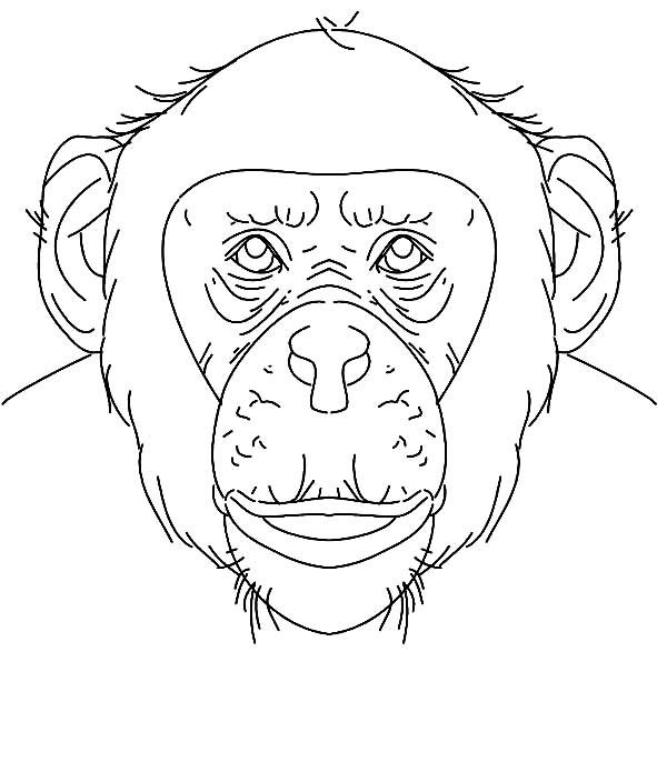 Chimpanzee, : Chimpanzee Face Coloring Page