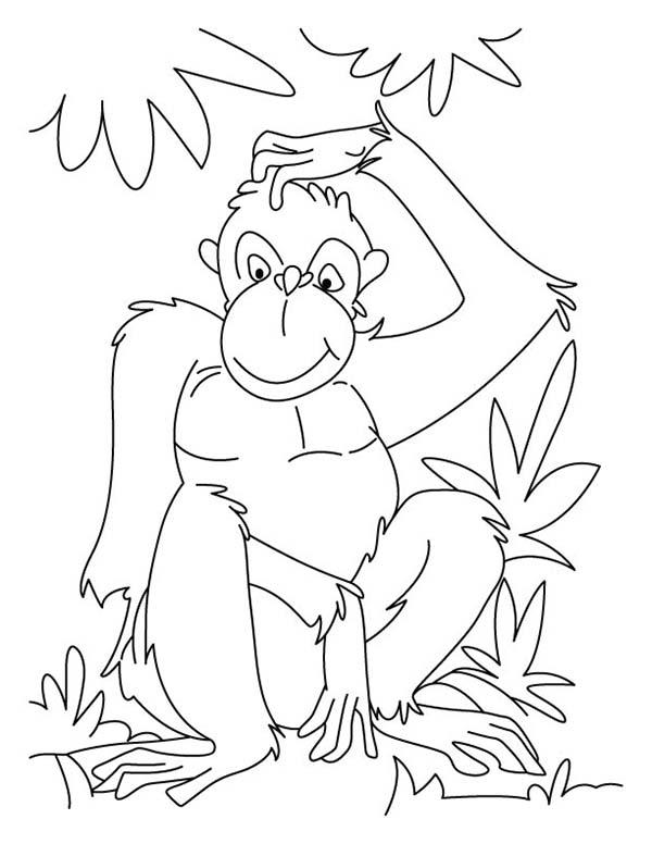 Chimpanzee, : Chimpanzee Scratch His Head Coloring Page