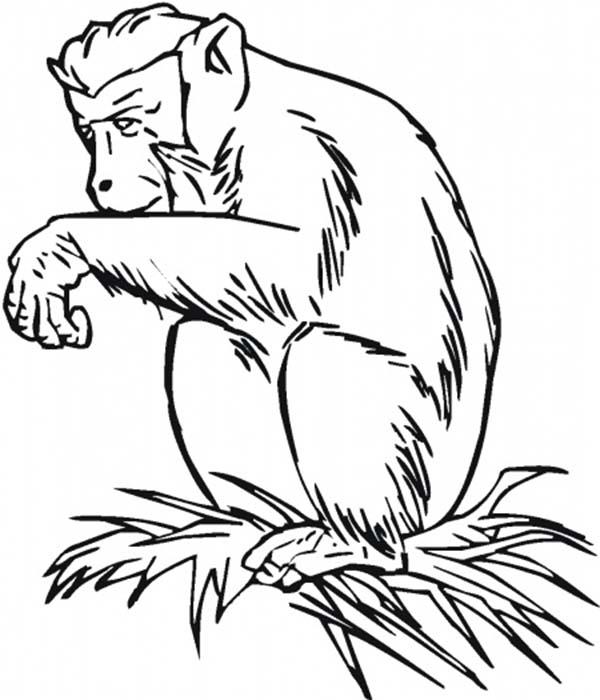 Chimpanzee, : Chimpanzee Sitting on Grass Coloring Page