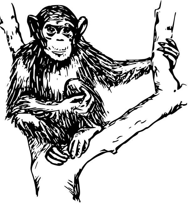 Chimpanzee, : Chimpanzee Sitting on Tree Coloring Page