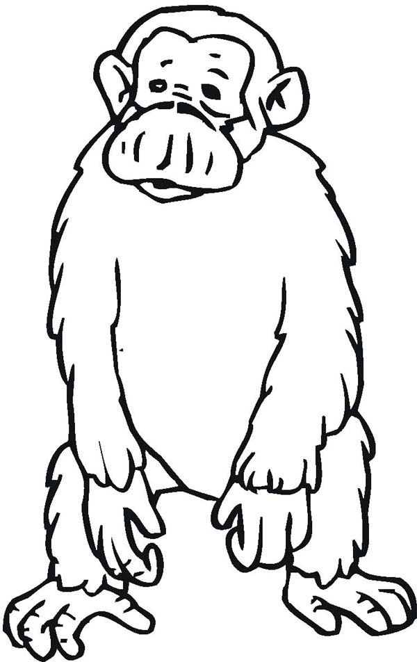 Chimpanzee, : Chimpanzee Standing on Two Feet Coloring Page