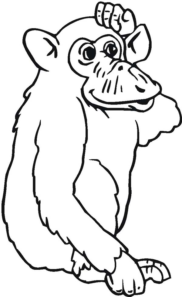 Chimpanzee, : Chimpanzee is Confuse Coloring Page