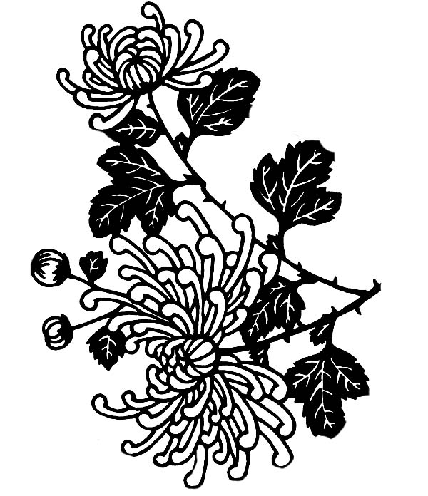 Chrysanthemum, : Chrysanthemum in Flower Arrangement Coloring Page