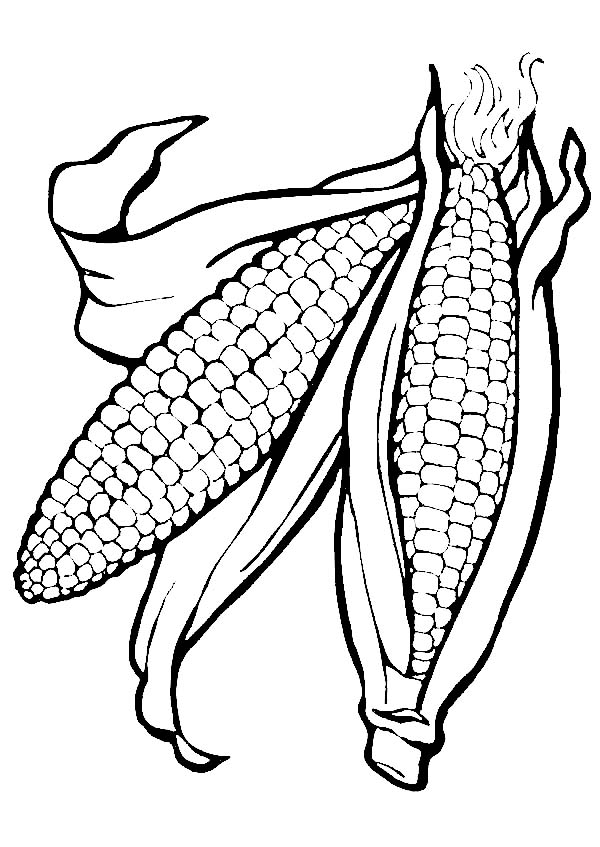 Corn, : Corn Ears Picture Coloring Page