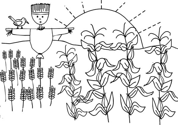 Corn, : Corn Plant and Scarecrow Coloring Page