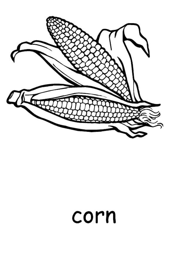 Corn, : Corn for Seed Coloring Page