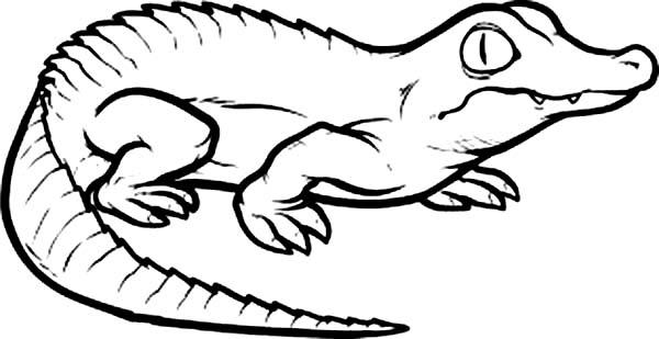 Crocodile, : Crocodile Coloring Page for Kids