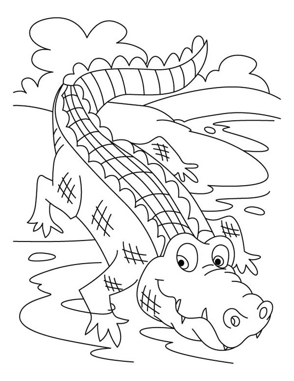 Crocodile, : Crocodile Taking Bath Coloring Page