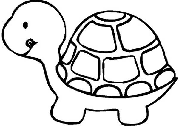 Turtle, : Cute Little Turtle Coloring Page