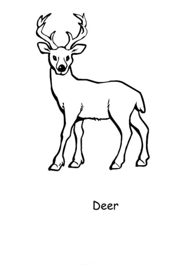 Deer, : D is for Deer Coloring Page