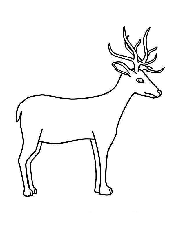 Deer, : Deer Coloring Page for Kids