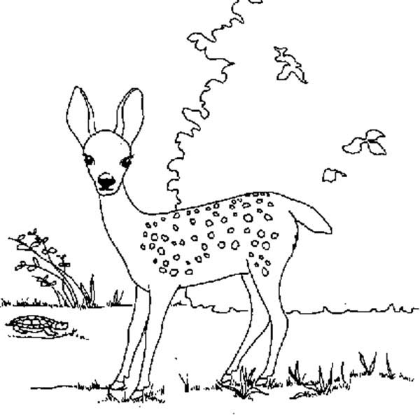 Deer, : Deer Fawn Finding Food Coloring Page