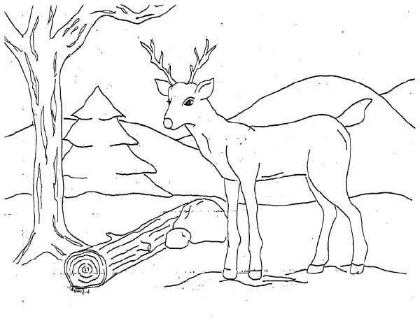 Deer, : Deer Looking for Food Coloring Page