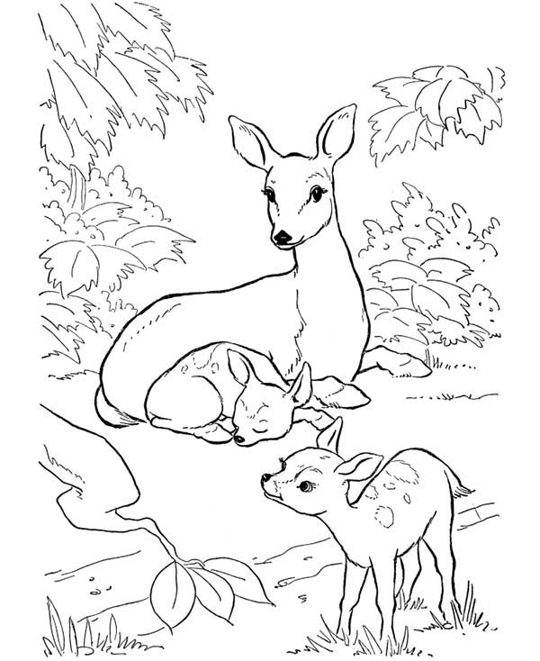 Deer, : Deer Mother and Her Two Fawns Coloring Page