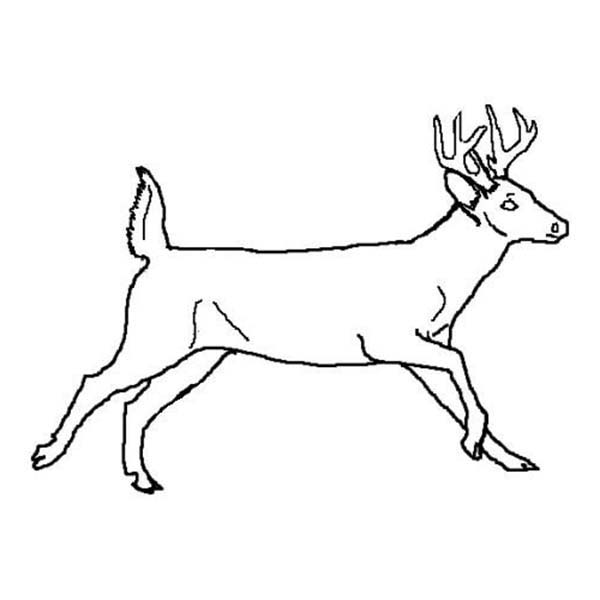 Whitetail Deer Coloring Pages. whitetail deer head coloring pages ... | 600x600