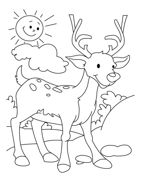 Deer, : Deer Walking Around When Sun is Shining Bright Coloring Page