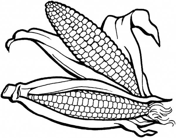 Corn, : Delicious Corn Coloring Page