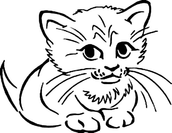 Cat, : Distracted Cat Coloring Page