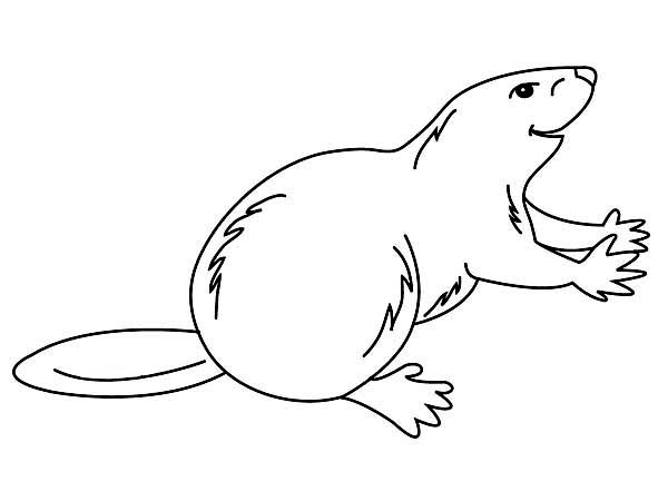 Beaver, : Drawing Beaver Coloring Page