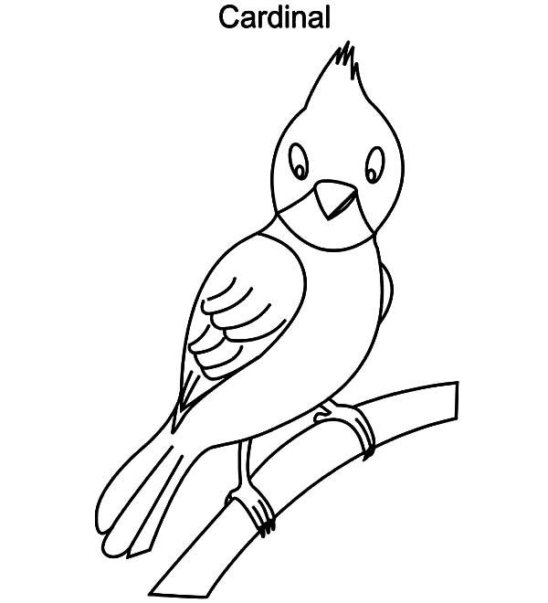 Cardinal Bird, : Drawing Cardinal Coloring Page