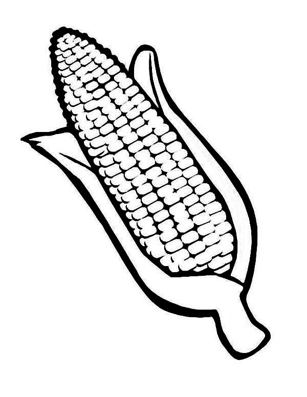 Corn, : Drawing Corn Cob Coloring Page