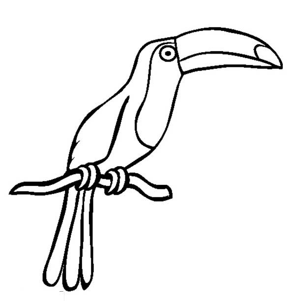 Toucan, : Drawing of a Toucan Coloring Page