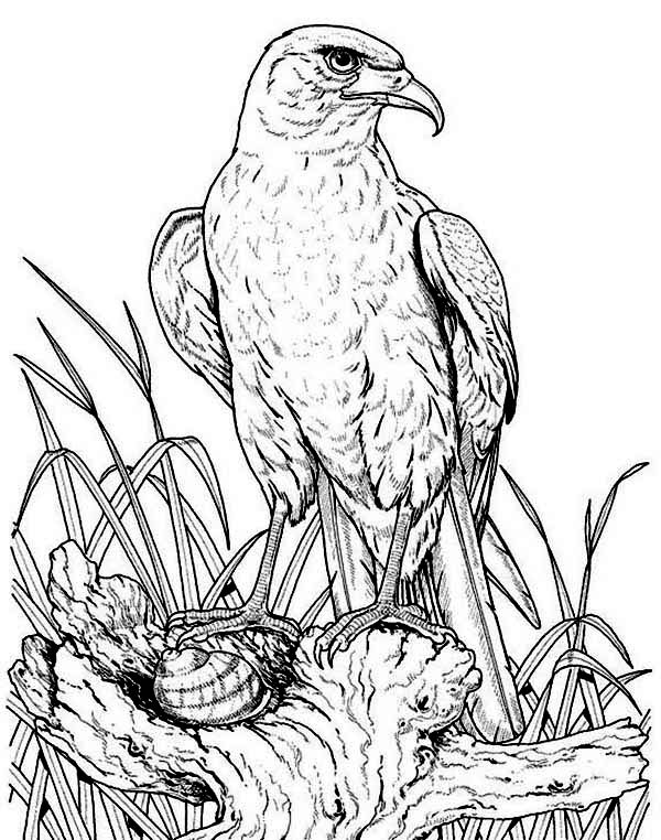 Eagle, : Eagle Back to His Nest Coloring Page