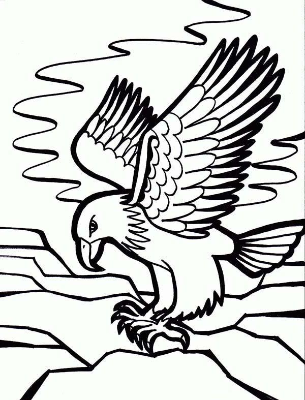 Eagle, : Eagle Coloring Page