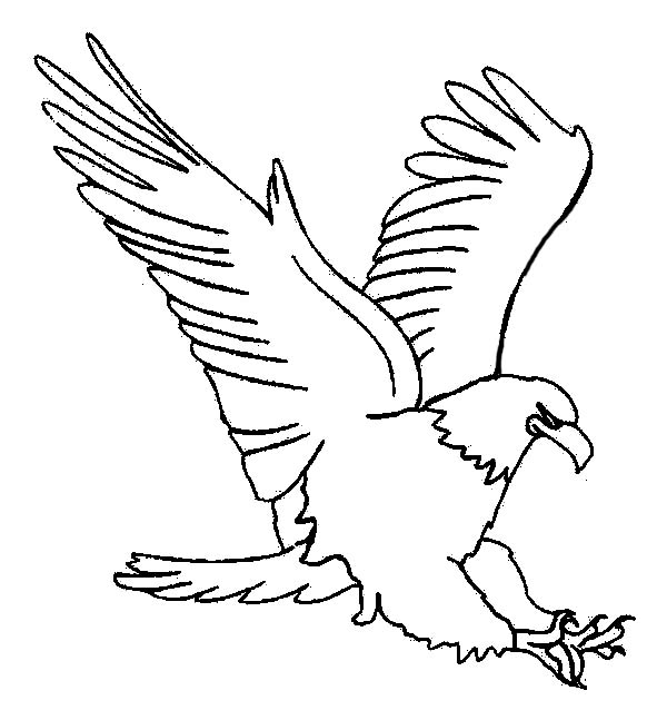 Eagle, : Eagle Dive from Sky High Coloring Page