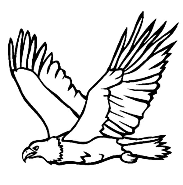 Eagle, : Eagle Has Very Sharp Vision Coloring Page