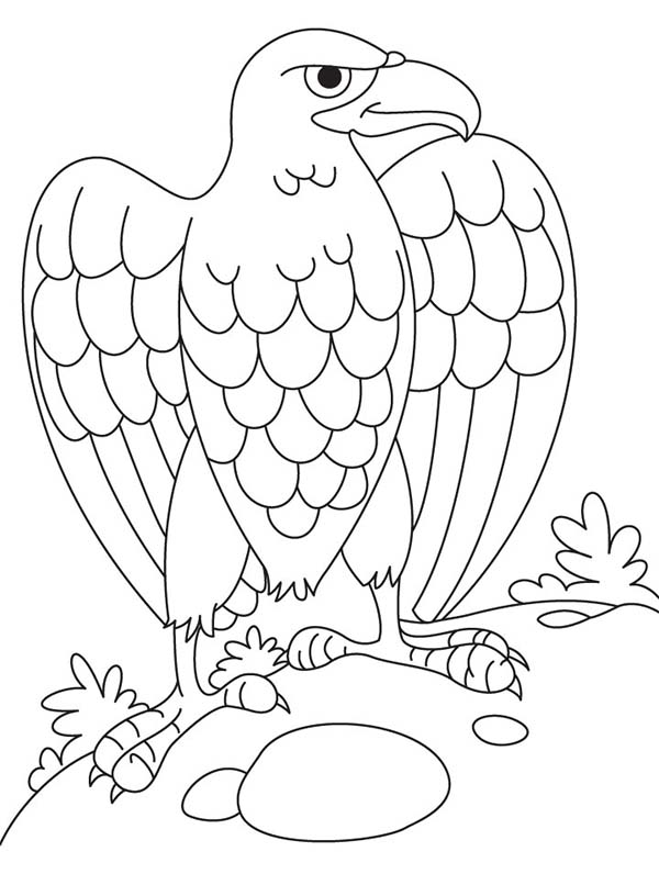 Eagle, : Eagle Laying Egg Coloring Page