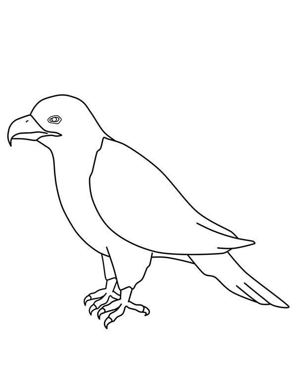 Eagle, : Eagle Outline Coloring Page