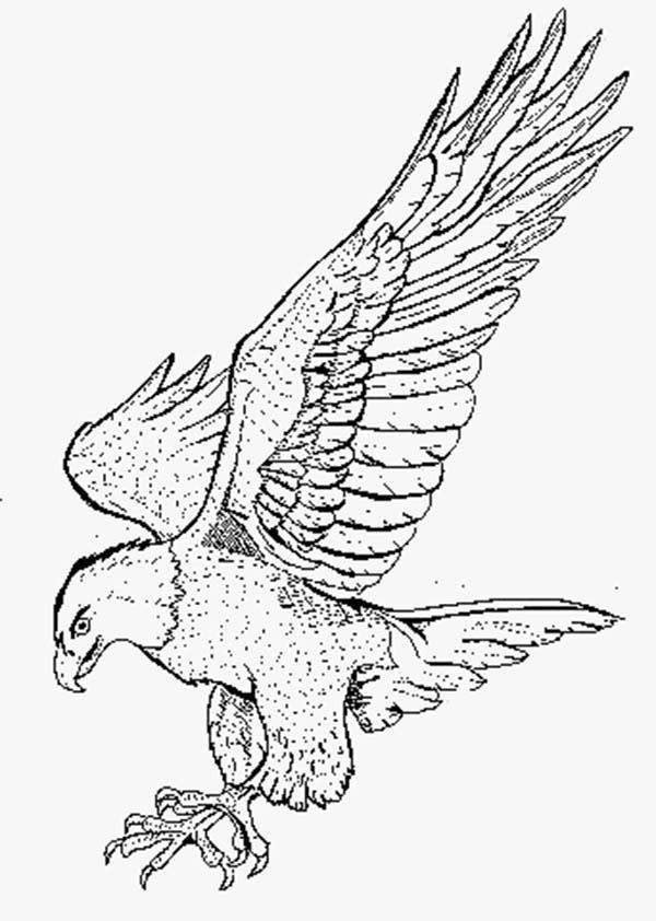 Eagle, : Eagle Pounce His Prey Coloring Page