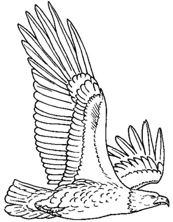 Eagle, : Eagle Spread His Wing Coloring Page