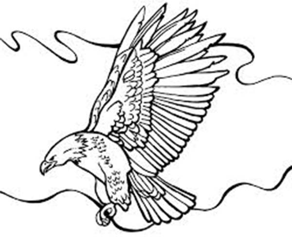 Eagle, : Eagle Wild and Free Animal Coloring Page