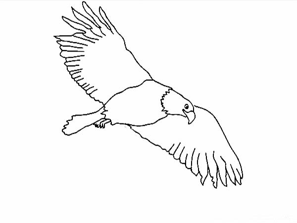 Eagle, : Eagle the Sky Predator Coloring Page