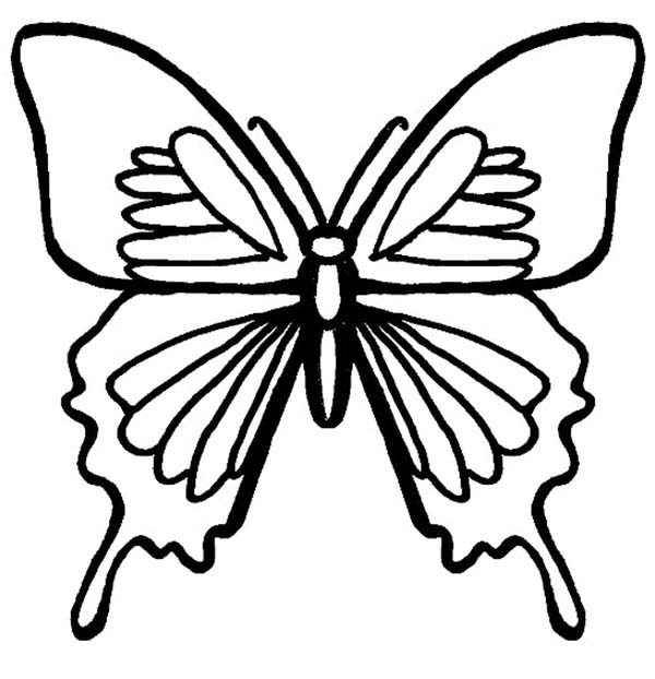Bugs, : Evolving Bugs Butterfly Coloring Page